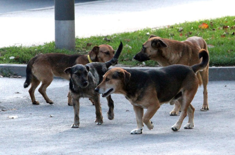 Pravo i postupak za naknadu štete usled ujeda vlasničkih pasa i pasa lutalica