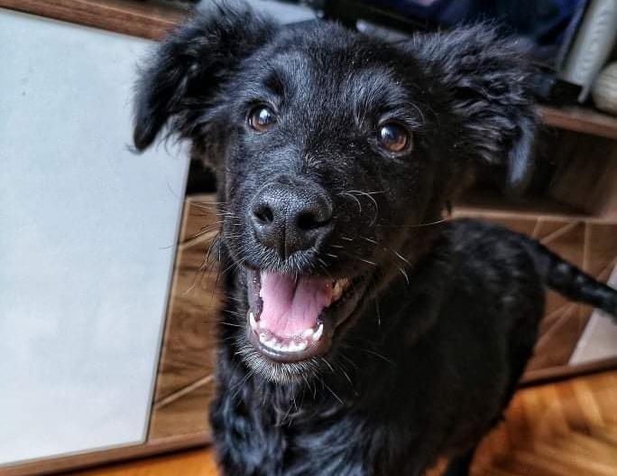 Nestao pas u Češlju, odaziva se na ime Bagira